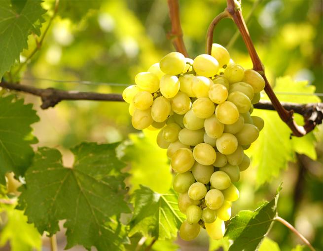 Полезные рецепты с виноградом