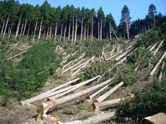 deforestation1