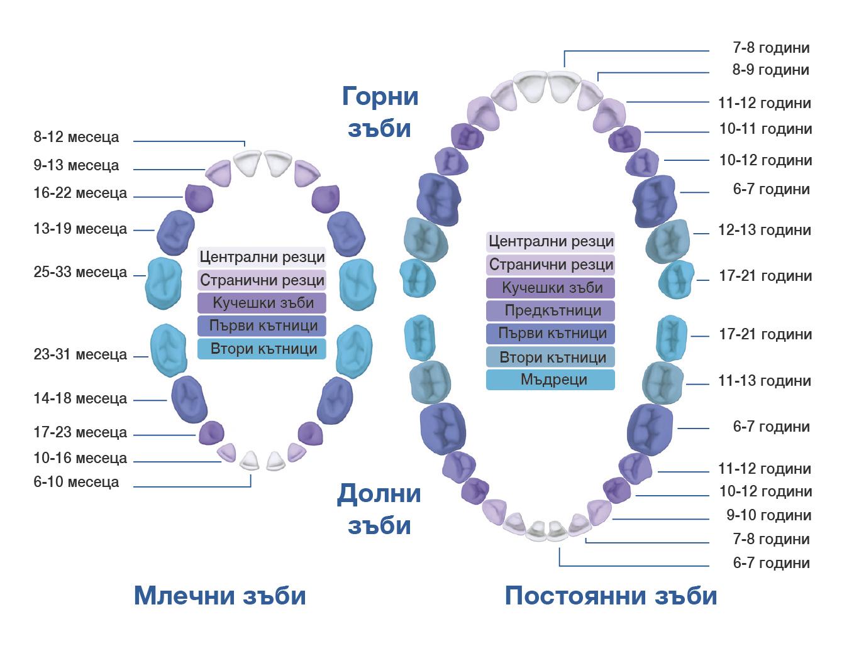 Съвети за здрави детски зъбки при деца от 0-2 г.