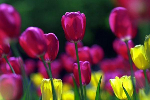 пролет, равноденствие