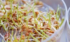 Кълновете – жива храна за сила, здраве и тонус