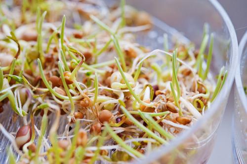 Кълновете – живата храна, която ни дава сила в края на зимата