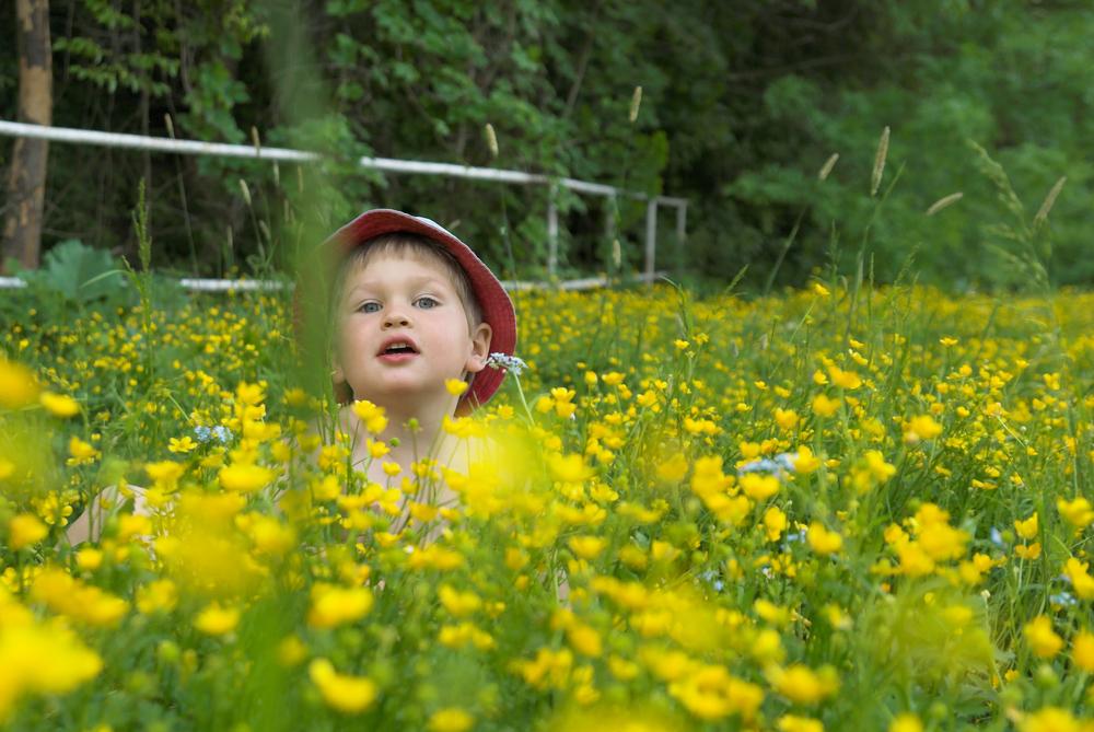 Ароматните билки – приятели на децата
