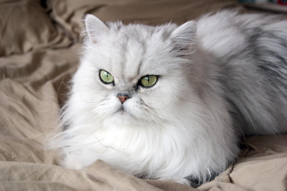 На махлата котките