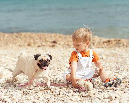 Синдромът на мигриращата ларва атакува предимно децата
