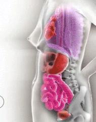 Какво се случва с органите на жената по време на бременност? (видео)