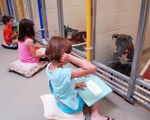 Деца четат на бездомни кучета