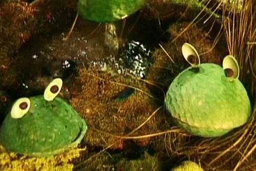 За какво се карат жабите (приказка)