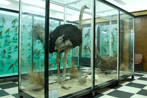 Лятна програма за млади изследователи на Националния природонаучен музей