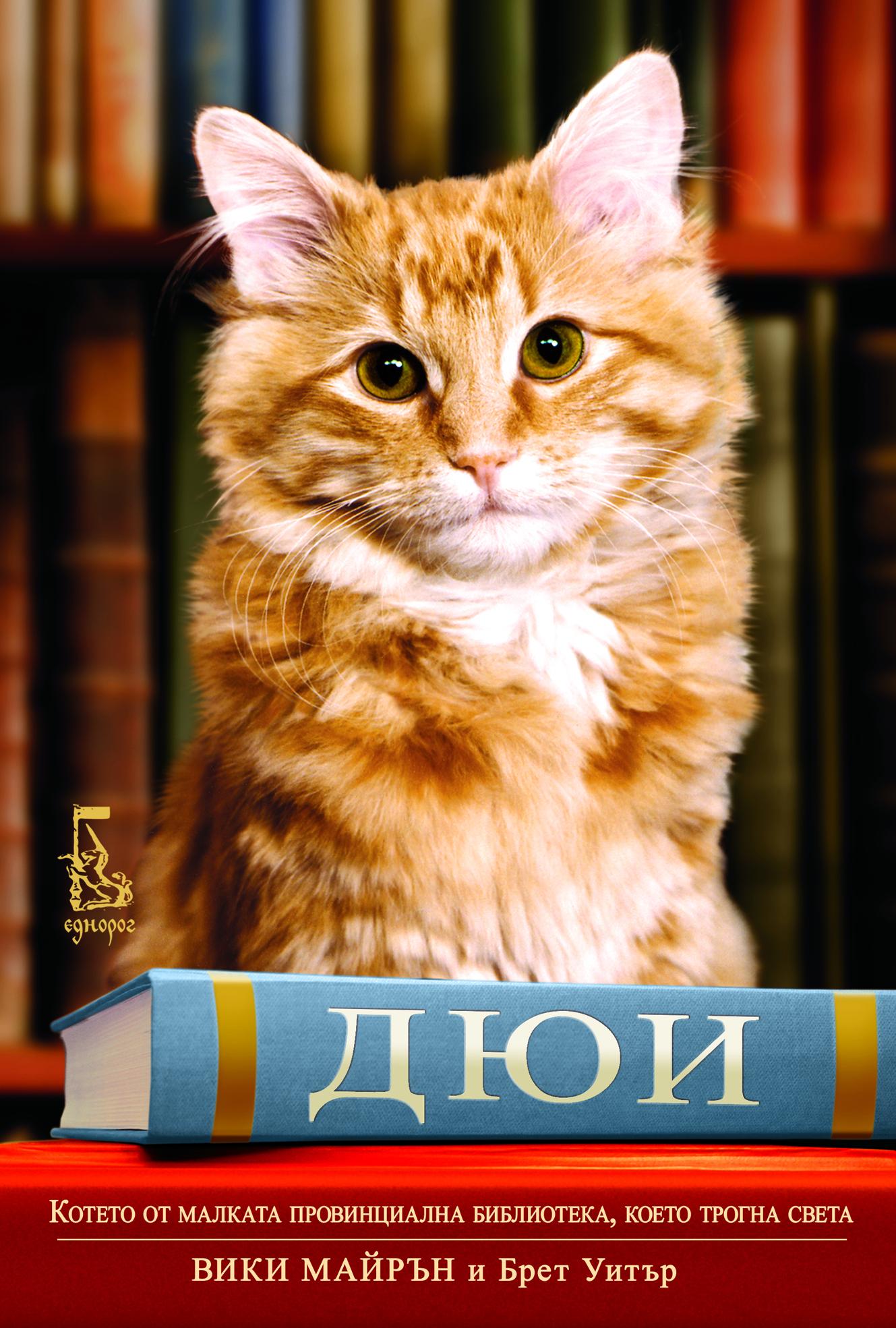 Дюи – котето от малката провинциална библиотека, което трогна света