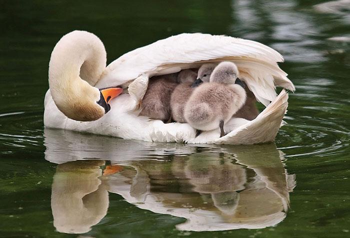 Как птиците се грижат за бебетата си