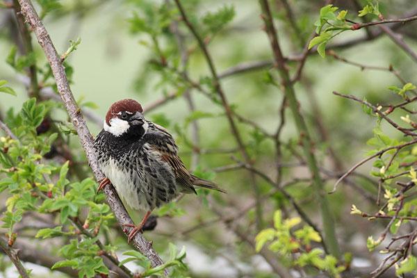 В Международния ден на птиците – специални събития за децата