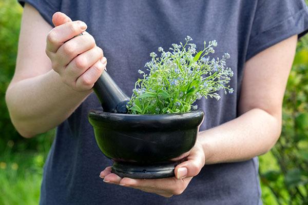 Седем лечебни растения с антибиотично действие