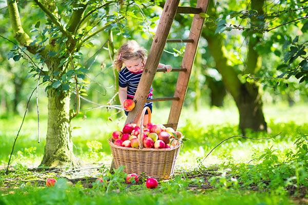 9 факта за децата, родени през септември