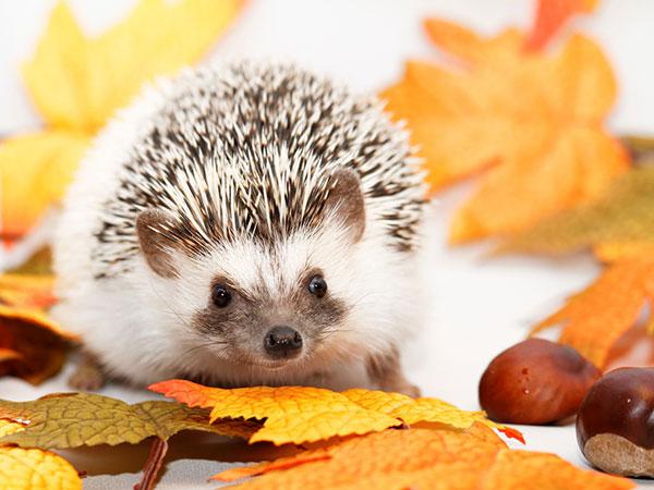 21 идеи за есенни декорации