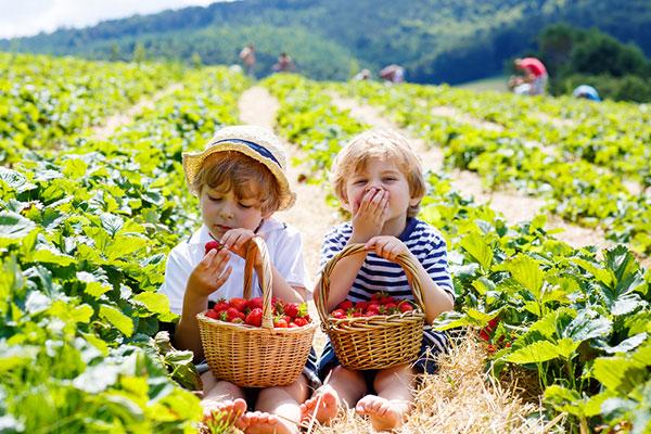 На каква възраст можем да дадем първата ягода на детето