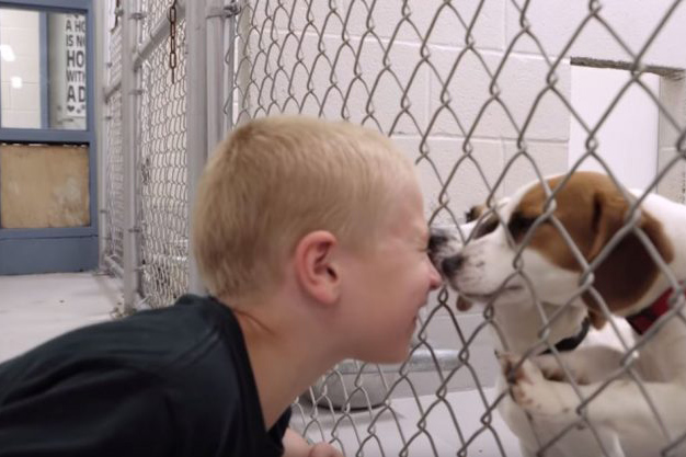 7-year-old-named-kid-of-the-year-after-rescuing-more-than-1300-dogs2